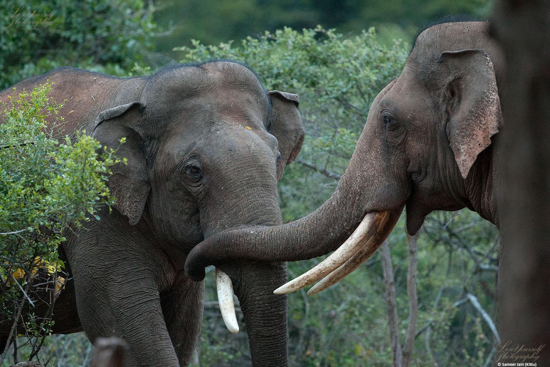 elephant_comm_sjk_3501