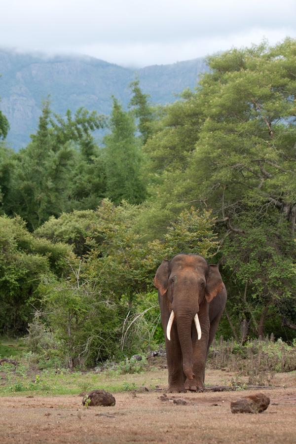 elephant_scape_img_9967