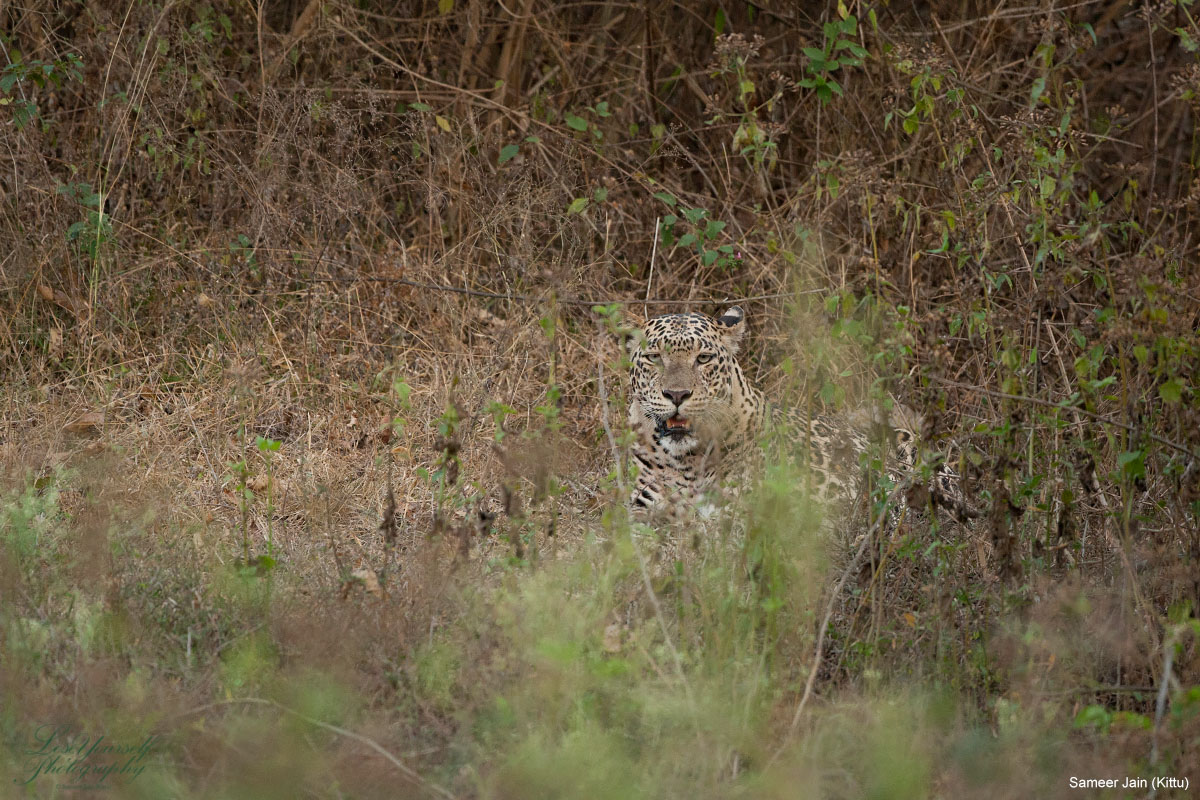 leopard_jk10048