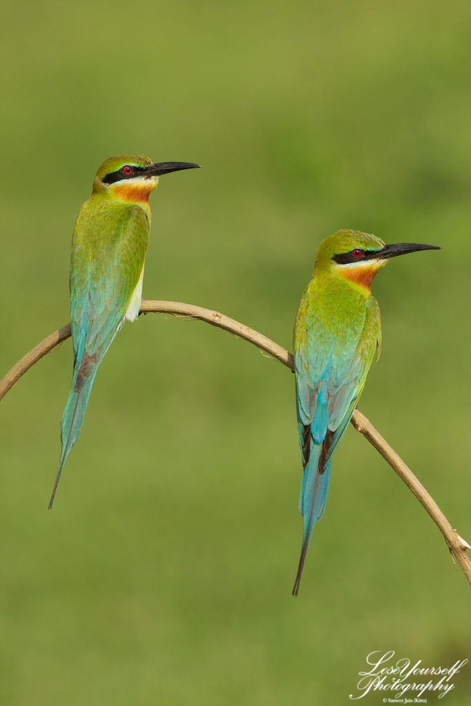 beeeater_bt_couple_img_3886-2012-05-02