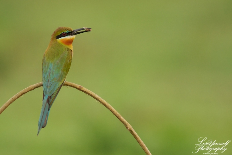 beeeater_bt_feed_img_3478-2012-05-02-at-06-42-24