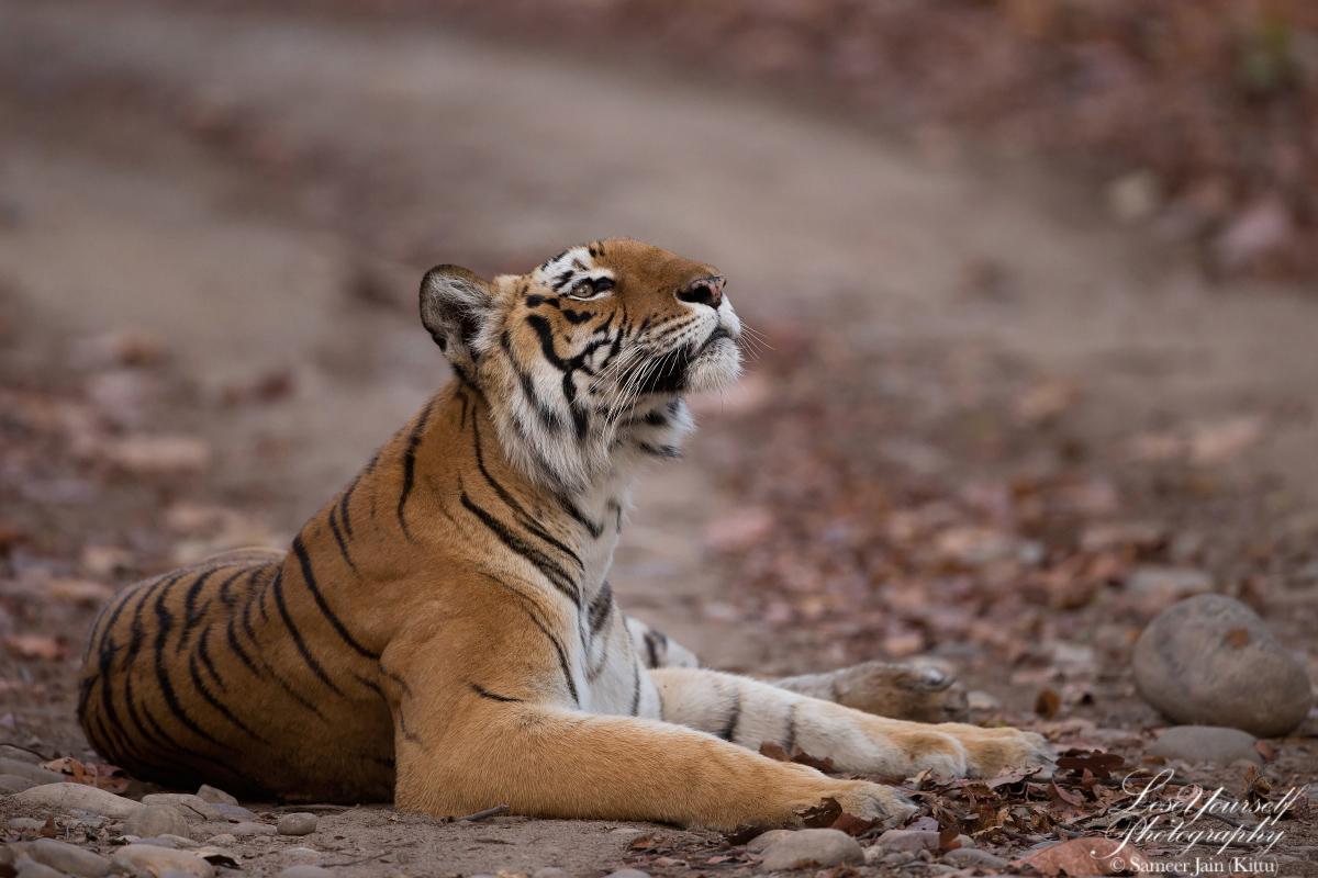 Tiger_Corbett_MG_4938