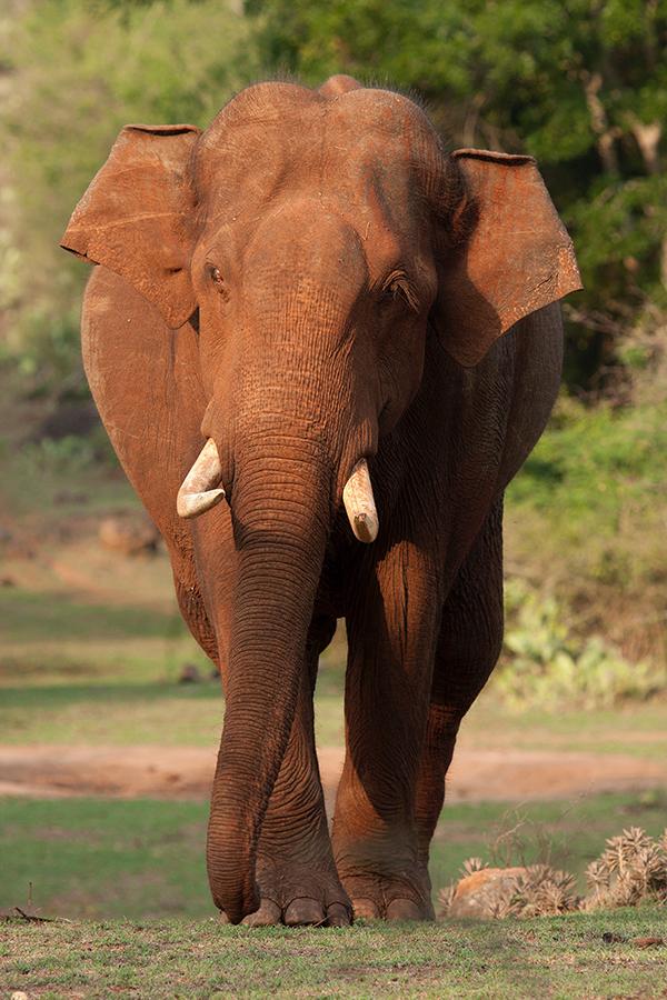 Elephant__IMG_2178_wp