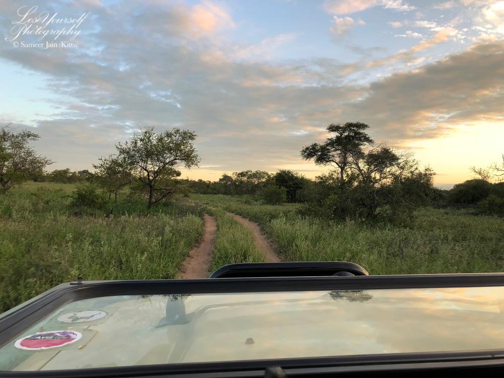 Safari_Sky